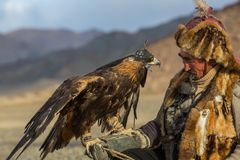 哈萨克人老鹰猎人传统衣物,当寻找对拿着在他的胳膊的野兔一只鹫在韦斯特时沙漠山  图库摄影