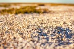 哈萨克斯坦干草原盐土壤  免版税库存图片
