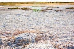 哈萨克斯坦干草原盐土壤  库存照片