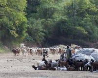 哈马尔在一个干燥河床上看管与他们的牧群 Omo谷,埃塞俄比亚 免版税图库摄影