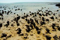 哈默尔恩水池Stromatolites 免版税库存图片