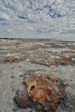 哈默尔恩水池Stromatolites Gascoyne地区 澳大利亚西部 免版税库存照片