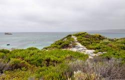 哈默尔恩海湾:绿色沿海沙丘 免版税库存照片