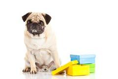 哈巴狗在白色背景隔绝的狗箱子,当前礼物 免版税库存图片