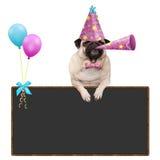 哈巴狗垂悬与在空白的黑板标志的爪子的小狗与气球和佩带的桃红色党帽子 库存图片