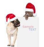 哈巴狗小狗和小小猫与红色圣诞老人帽子在白色上 图库摄影