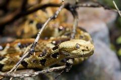 响尾蛇木材 库存照片