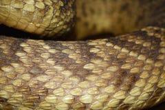 响尾蛇背景 库存照片