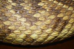 响尾蛇背景 免版税库存图片