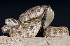 响尾蛇 库存照片