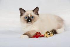 响铃圣诞节金小猫 库存图片