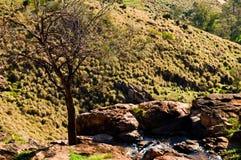 响铃峡谷自然保护 免版税库存照片