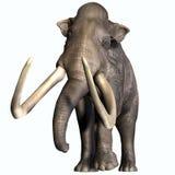 哥伦布毛象前面外形 库存照片