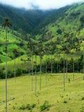 哥伦比亚掌上型计算机salento结构树蜡 免版税库存图片