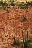 哥伦比亚沙漠tatacoa 库存照片