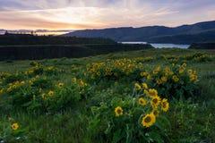 哥伦比亚河峡谷全国风景区俯视 免版税库存图片