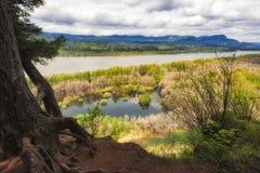 哥伦比亚河峡谷视图 库存照片