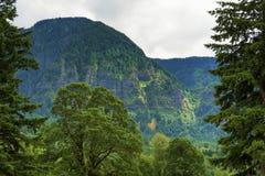 哥伦比亚河峡谷 免版税库存照片