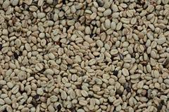 哥伦比亚的咖啡粒 免版税库存图片
