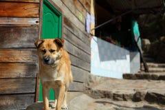 哥伦比亚的狗 免版税库存照片
