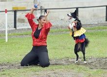 哥伦比亚的跳舞狗 库存照片