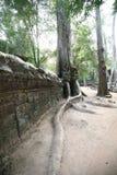 吴哥寺庙(Ta Prohm),暹粒,柬埔寨大树  免版税库存照片