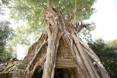 吴哥寺庙(Ta Prohm),柬埔寨入口  免版税库存图片