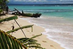 哥斯达黎加和巴拿马自然和风景 美国旅行 旅行癖 图库摄影