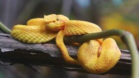 哥斯达黎加和巴拿马自然和风景 美国旅行 旅行癖 免版税库存照片