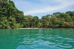 哥斯达黎加的加勒比海岸在蓬塔uva 免版税图库摄影