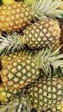 从哥斯达黎加的自然菠萝 图库摄影