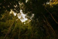 哥斯达黎加自然背景旅行目的地里约CelesteCosta Rica自然背景旅行目的地里约塞莱斯特 免版税库存图片