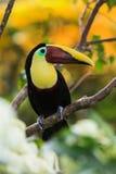 哥斯达黎加 免版税图库摄影