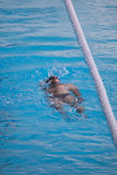 哥罗德诺,白俄罗斯- DEC 17 :人在公开游泳池游泳在哥罗德诺,白俄罗斯, 2014年12月17日 库存照片
