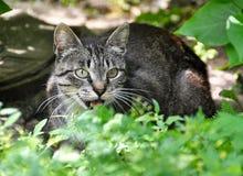 哭泣在草的猫 免版税库存图片