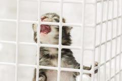 哭泣的小猫 免版税库存照片