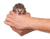 哭泣的小猫 免版税库存图片