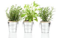 贤哲、麝香草和迷迭香草本植物 库存图片