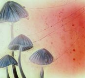 贤哲僧人水彩抽象艺术性的蘑菇 库存照片