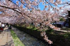 哲学家的步行,京都 免版税库存照片
