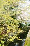 哲学家` s步行,或者Tetsugaku没有Michi,与青绿在春天,京都 库存照片