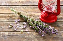贤哲植物和红色葡萄酒灯顶视图  库存图片