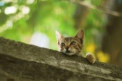 哺乳动物的屋顶 免版税库存图片