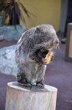 哺乳动物的pacarana 库存照片