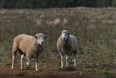 哺乳动物 免版税库存图片