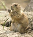哺乳动物 库存照片