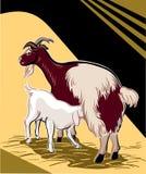 哺乳她的孩子的山羊 免版税库存照片