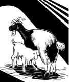 哺乳她的孩子的山羊 免版税库存图片