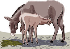 哺乳她的小狗的驴 免版税库存照片