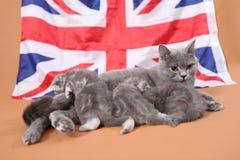 哺乳她的婴孩的猫 免版税库存图片